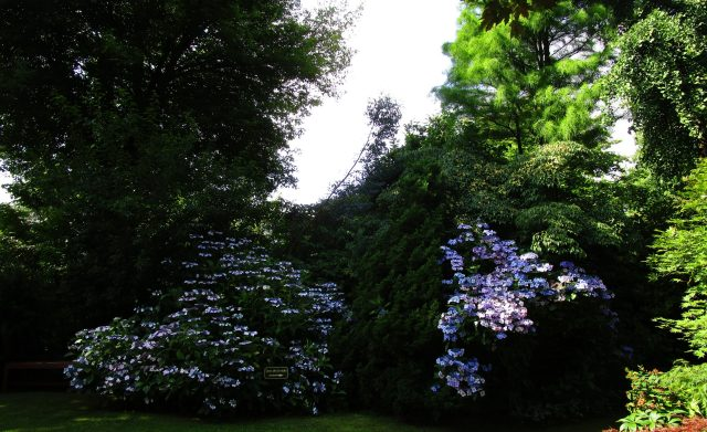 jardin du mesnil15