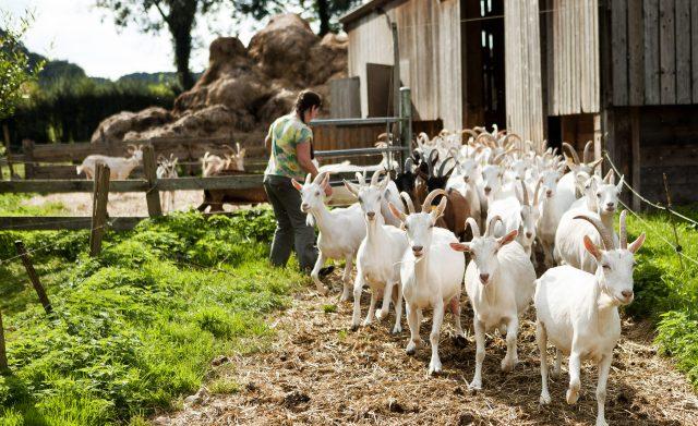 Bellencombre-ferme du Val de Bures-2016-1©SMA-H.Zangl